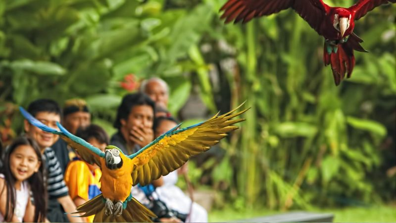 The-Amazing-Bali-Bird-Park