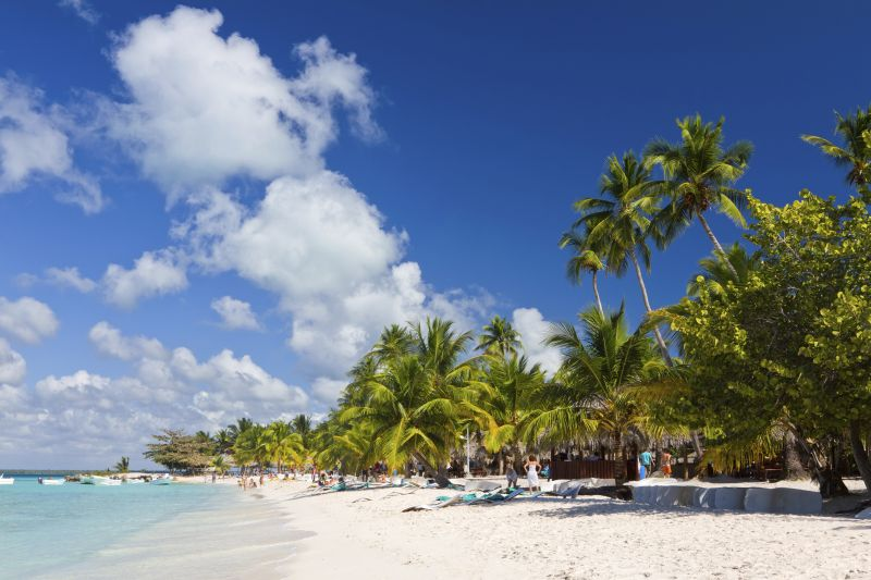 Palm trees on the tropical beach, Caribbean Sea, Dominican Republic