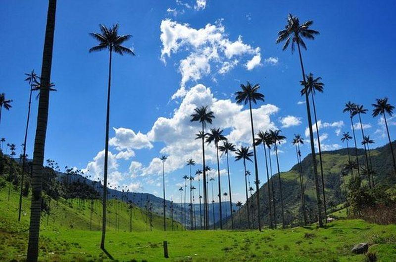 bosques-de-cocora
