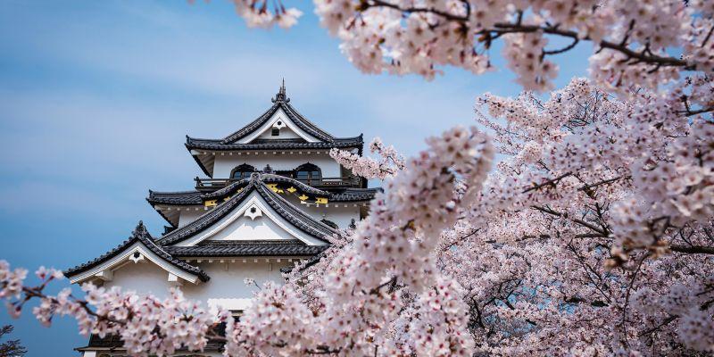 ALMY_E4JWWG_Castle_Flowers