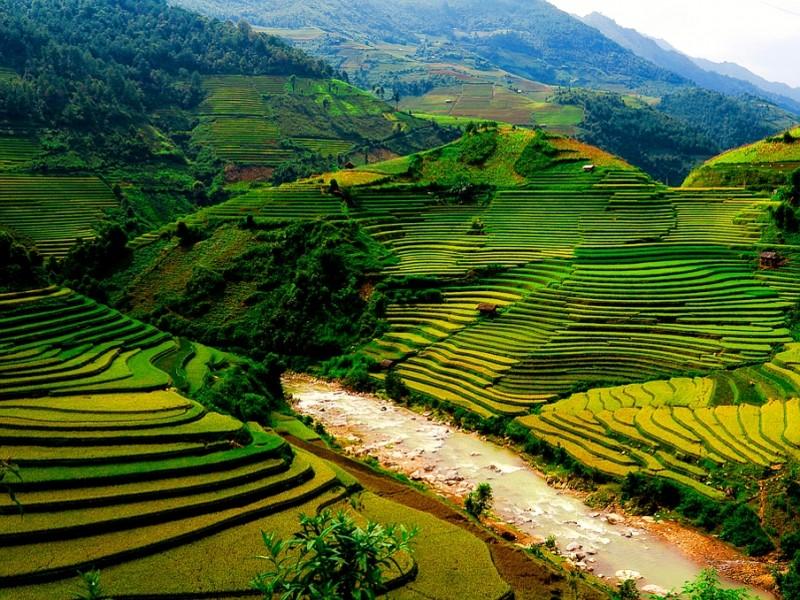 rijst-velden-noord-vietnam